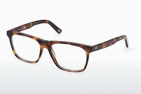Brille Web Eyewear WE5352 056